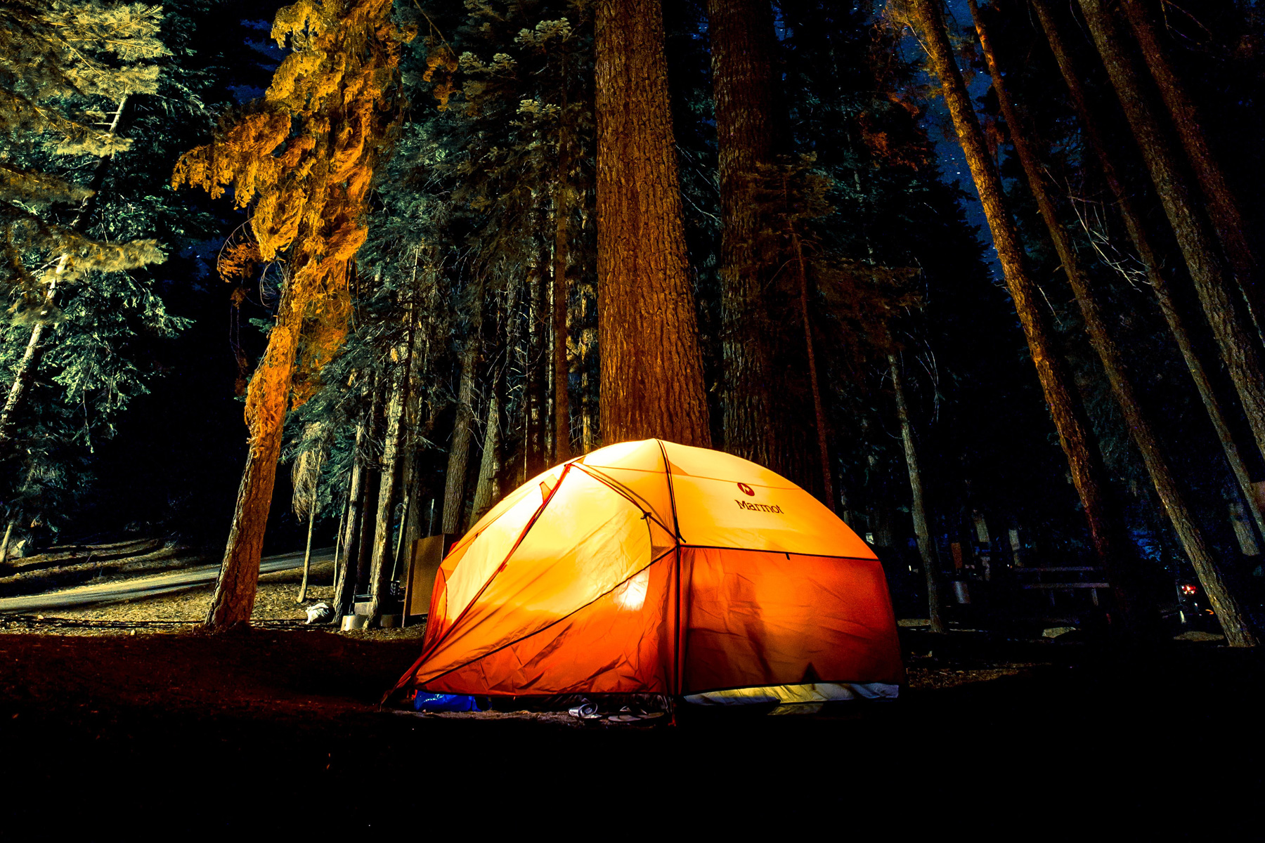 Ornage tent with light on at night next to a forest of tall trees
